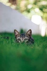 allontanare gatti dal giardino 10 cose che puoi fare con l aceto in giardino fito