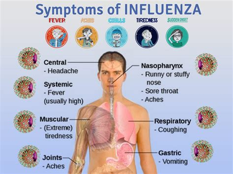 flu symptoms influenza causes symptoms and treatment of flu health care quot qsota quot tips and