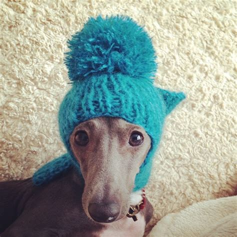 greyhound knitted hat pattern 24 best greyhounds in hats images on