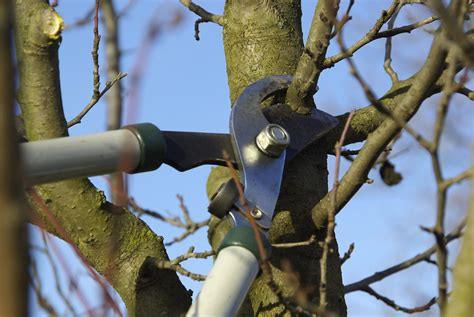 best time for pruning fruit trees how to prune a fruit tree