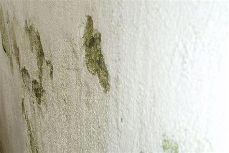 come togliere la muffa dal soffitto come togliere la muffa excellent come eliminare la muffa