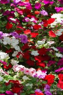 Summer Garden Flowers Beautiful Flowers Garden Beautiful Summer Carpet