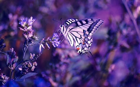 wallpaper cantik kupu kupu awiasih 10 gambar wallpaper kupu kupu cantik 1