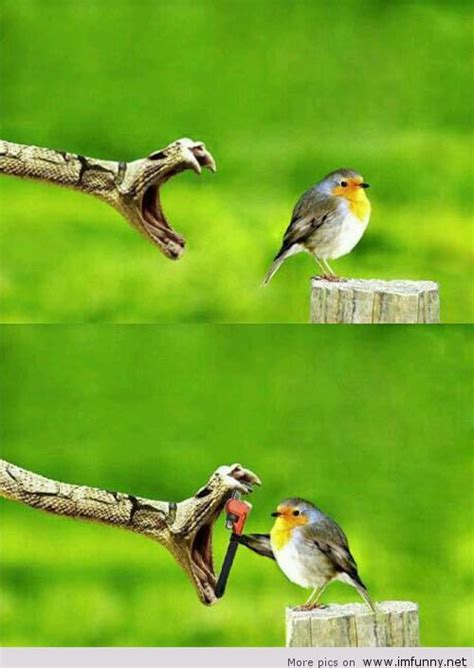 snake trying to eat bird funny picture