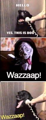 Yes This Is Dog Meme - wazzaap yes this is dog meme daily picks and flicks