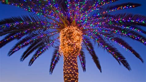 christmas lights on a palm tree share the knownledge