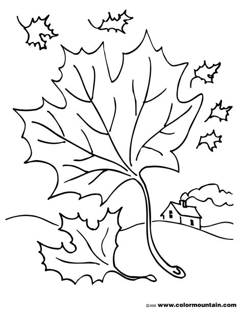 coloring page of a maple leaf free coloring pages of maple leafs