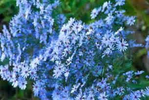 rooftop plants top plants for the autumn flower garden oxonian gardener