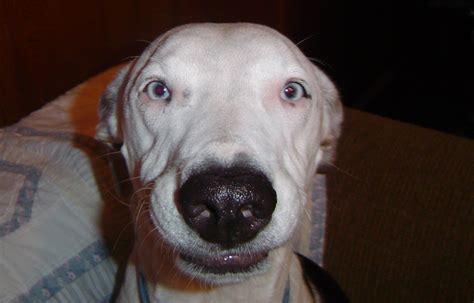 deaf dogs rock harrison s happy deaf dogs rock