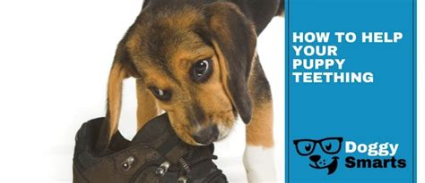 how to help teething puppies smarts helping you become a better parent