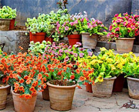 Jardin Paysager M Diterran En by Petit Jardin En Pots Colombes Maison Design Trivid Us
