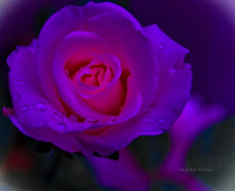 pink neon rose photograph  digiart diaries  vicky  fuller
