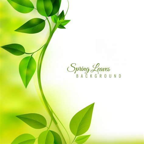 imagenes hojas verdes miembro rama fotos y vectores gratis
