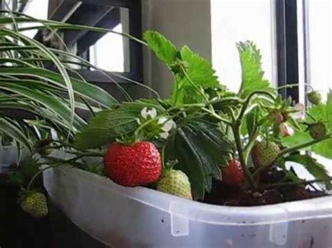 indoor garden setup how to setup indoor condo gardening patio gardening