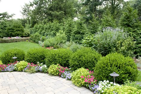 Bushes For Landscaping Organic Tree Shrub Care Bergen County Northern Nj