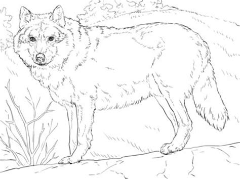 Grey Pages Lookup Grey Wolf Coloring Page Coloring For Adults