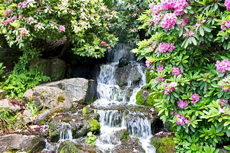 Springs Rhododendron Garden by S Day At Springs Rhododendron Garden