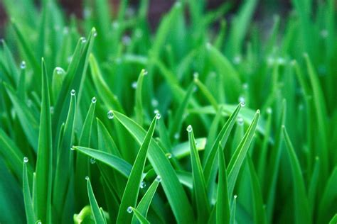 green grass wallpaper green grass wallpapers wallpaper cave