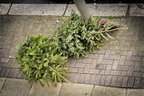 5 ways to recycle christmas trees new england today