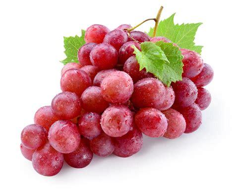 Bubuk Minuman Rasa Anggur Grape 3 jenis anggur yang bisa ditemukan di indonesia resepkoki