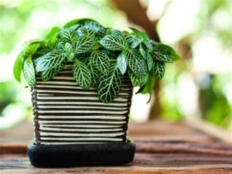 piante da ufficio purifica plante de apartament care purifica aerul 窶 casa 陌i gr艫dina