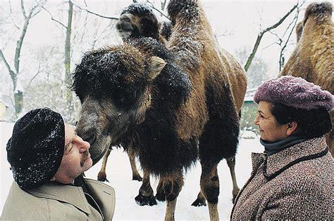 film it opinie duże zwierzę film recenzja opinie ocena telemagazyn pl