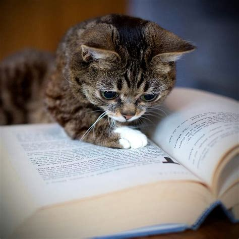 cat picture books smart cats never stop learning madly cats