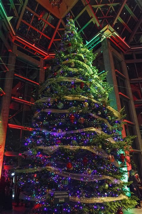 canadian christmas trees world s best trees royal vegas canadian casino