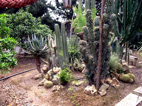 imagenes de jardines con cactus fotos de jardines de cactus o de suculentas pgina 3
