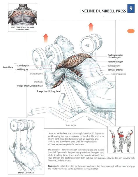 muscles used in incline bench press incline dumbbell press health pinterest flats