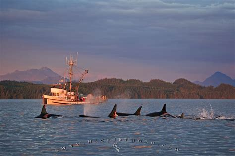 boat shrink wrap vancouver bc free wallpaper background fishing boat orca pod vancouver