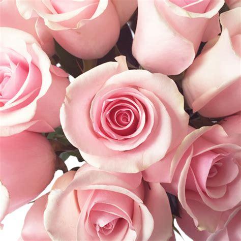 Light Pink Roshes by Titanic Light Pink