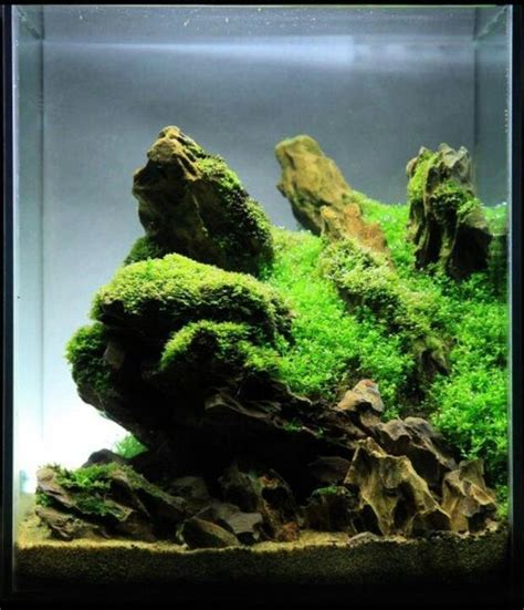 Aquascape Shrimp Tank by Aquascaping And On