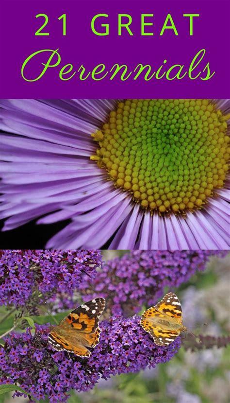 Winterharte Stauden Lila by 163 Best Images About Purple Perennials On