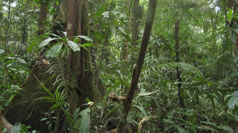 amazon amazon protected areas work in the amazon i am wilderness