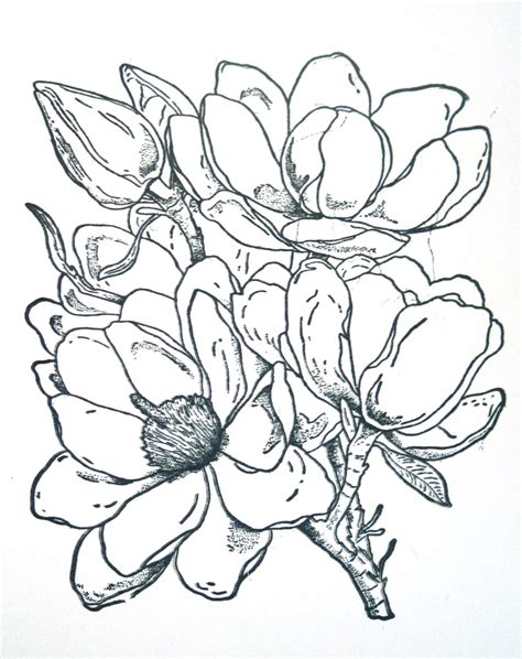 magnolia tree coloring pages magnolia 4 ink pinterest magnolias