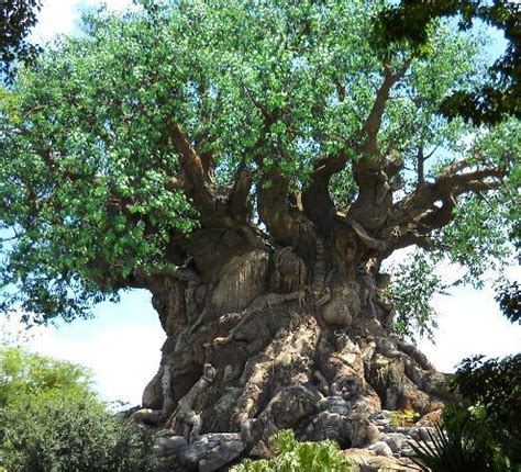 the tree of life  the icon of animal kingdom picture of