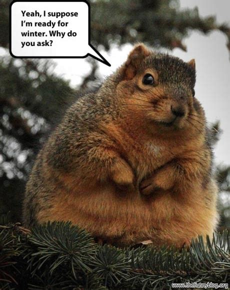 Funny Squirrel Memes - winter funnies to breathe is to write