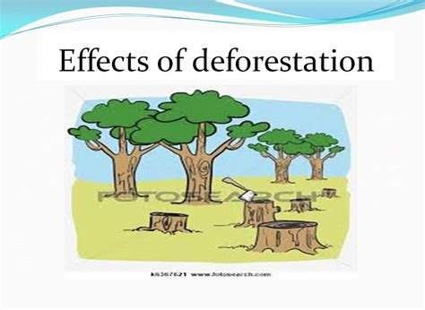 Causes And Effect Of Deforestation Essay by Effect Of Deforestation On Climate Essay The Placement