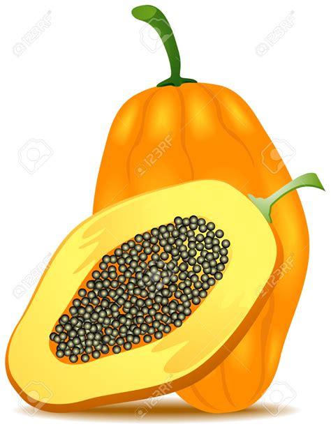 what color is papaya papaya clipart papaya fruit pencil and in color papaya