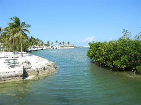 harbor lights islamorada florida your own private harbor picture of harbor lights motel