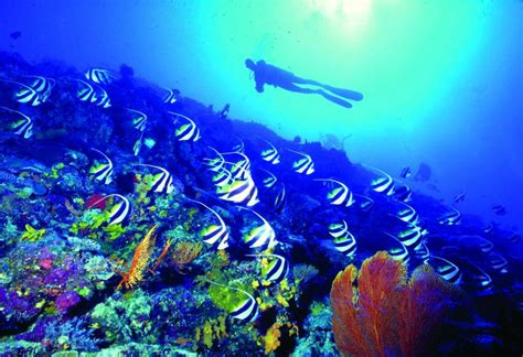 dive fiji diving and snorkeling the official website of tourism fiji