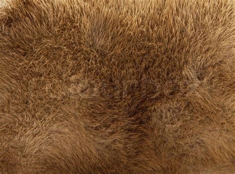Hair Rug Brown Fur Texture Stock Photo Colourbox
