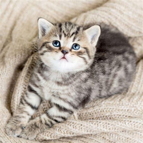 36 faits incroyables et surprenants sur les chats que vous ne connaissez sans doute pas