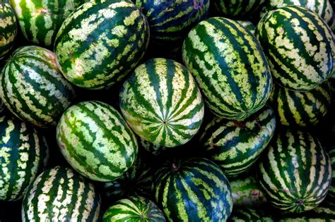 history of watermelon history of watermelons the watermelon of the past is