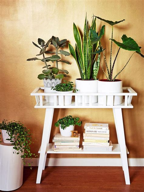 indoor plants for the home pinterest low lights lantliv ikea plant stand indoor plants indoor plants
