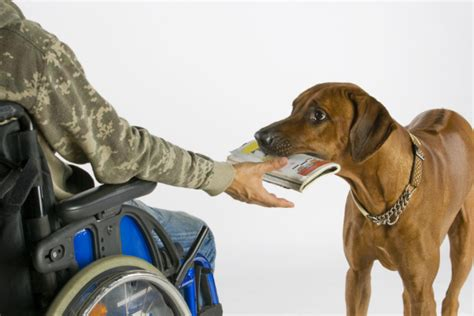 how do they service dogs 10 types of service dogs and what they do