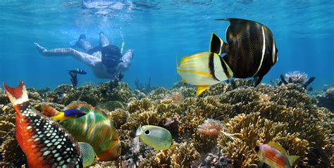 best places in the world for snorkeling the best places for snorkeling in cancun and riviera