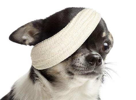 liquid bandage for dogs with bandage newhairstylesformen2014