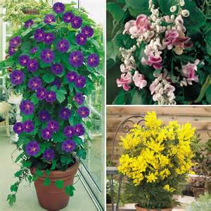 climbing pot plants evergreen potted plants for deck flowers flower plants